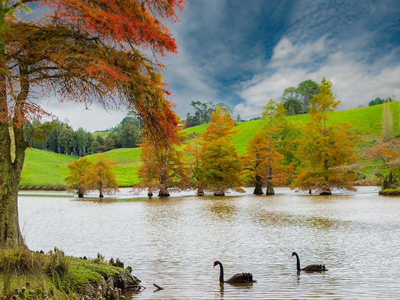 Mclaren Falls Park